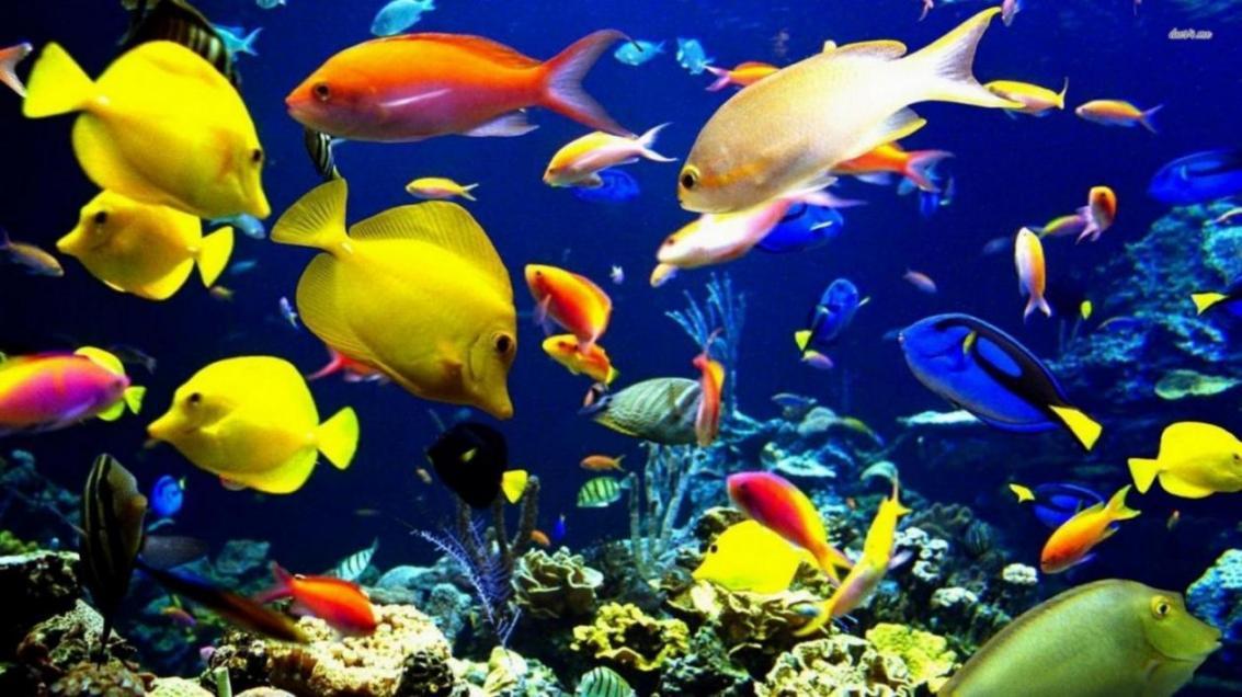 Ornamental fish town in mahallat financial tribune for Ornamental fish tank