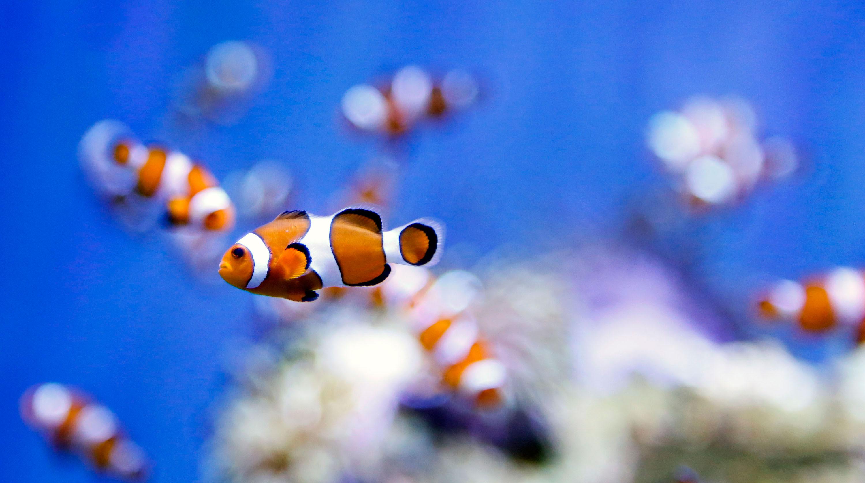 Markazi exports ornamental fish financial tribune for Ornamental fish