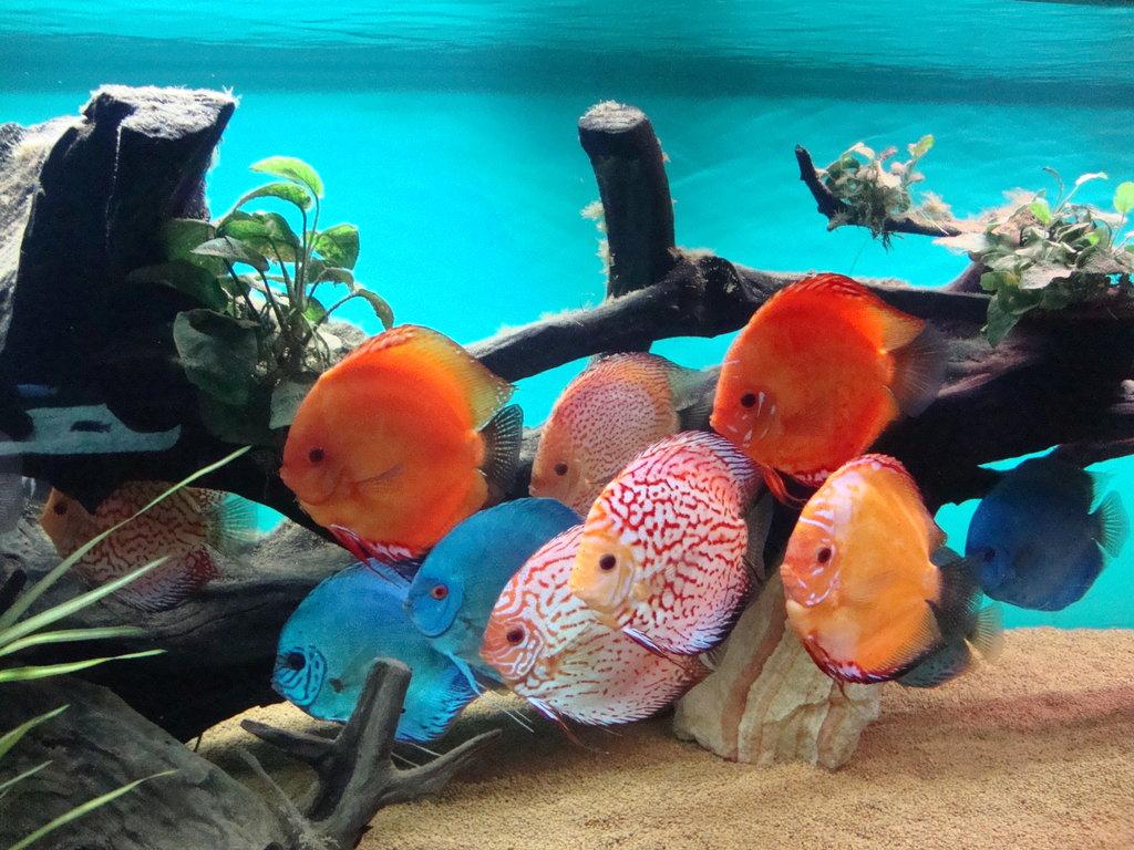 Ornamental fish exports double last year financial tribune for Ornamental fish