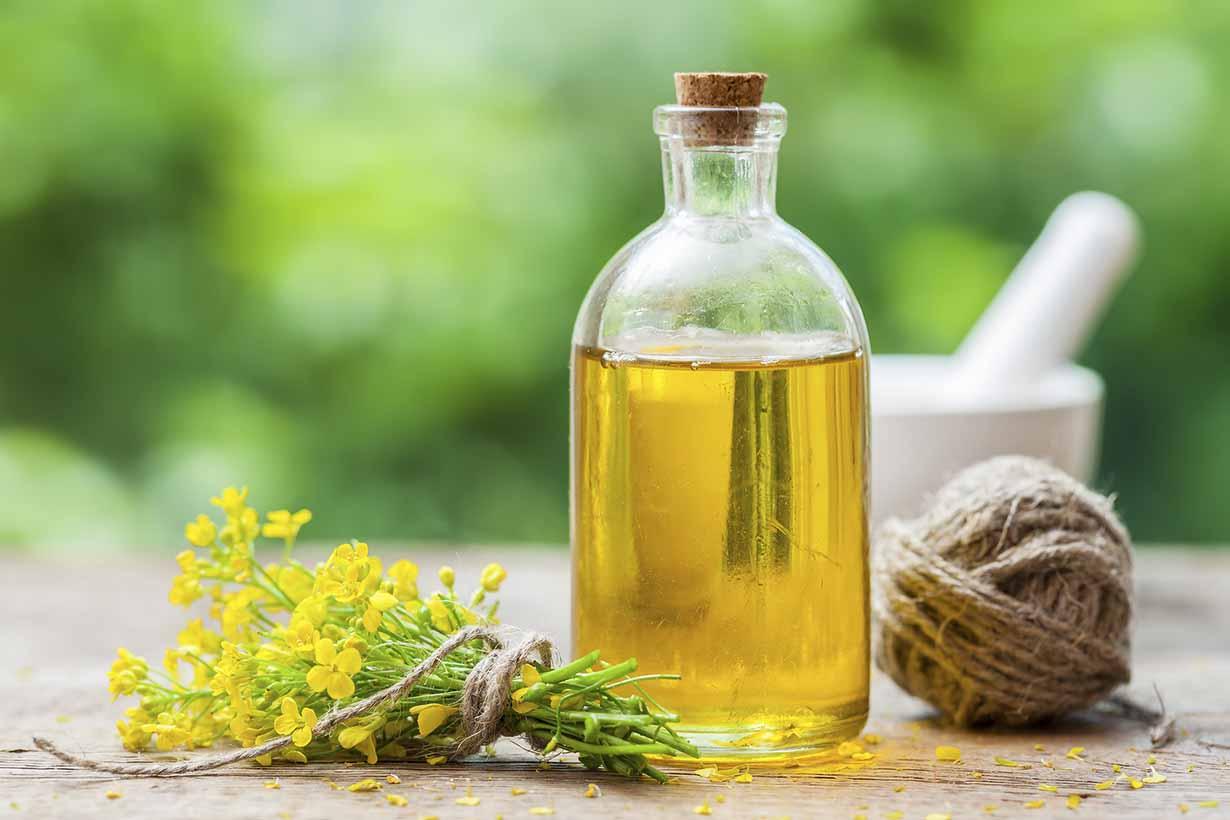 Oil Edible Plants : Tehran hosts seedex financial tribune