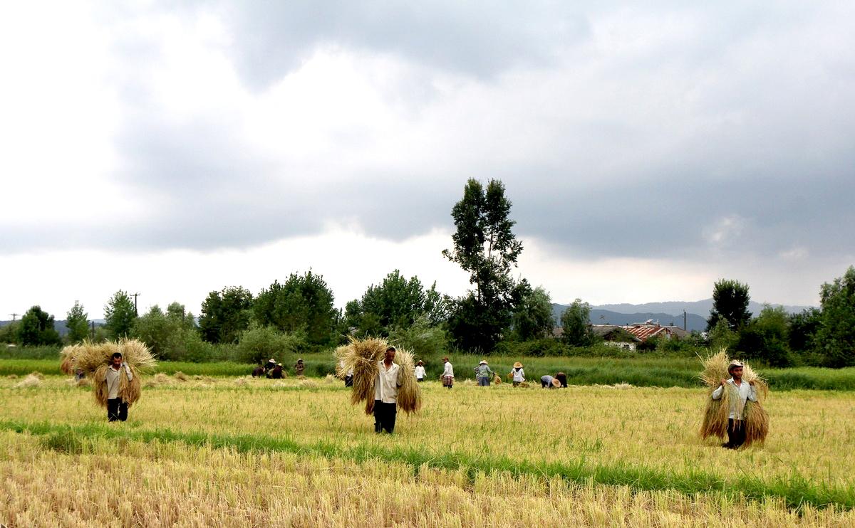 Iranian government amends rice import tariffs financial Cuisines you tarifs
