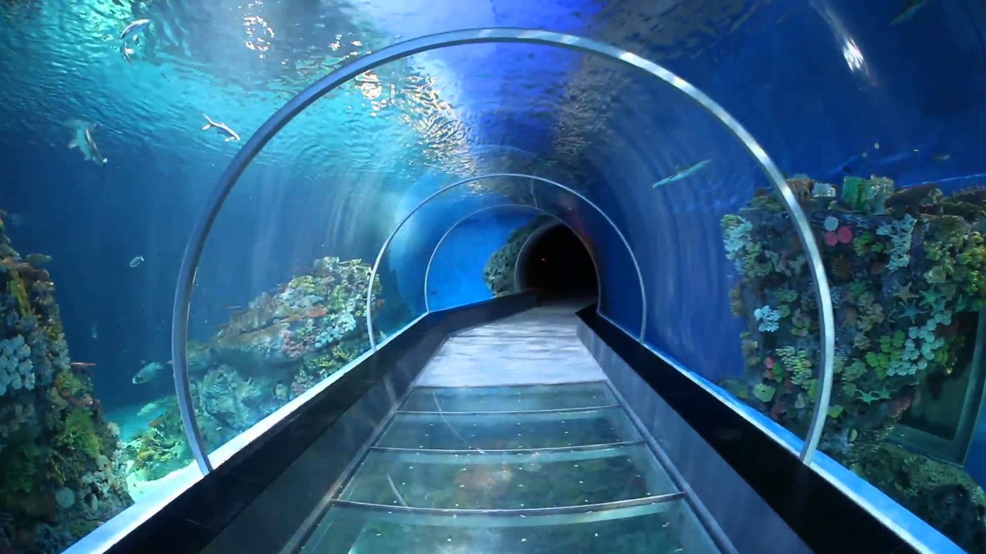 Dubai Airport Virtual Aquarium To Scan Visitors