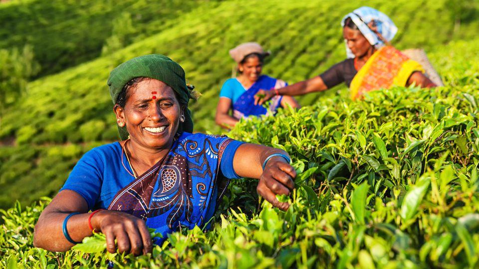 Indian Tea Exporters Fretting Over US Sanctions Renewal Against Iran | Financial Tribune