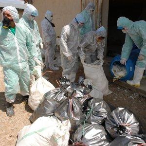 Iran Veterinary Organization Takes  on Avian Flu by Importing Vaccine