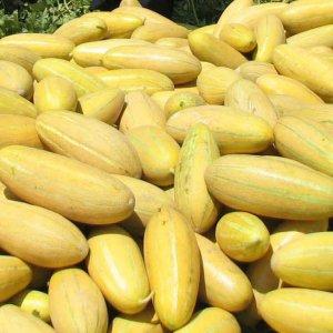 Citrus, Melon Zest Exports Earn $277m