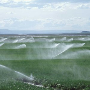 Modern Irrigation Systems  Installed Over 180,400 ha Last Year