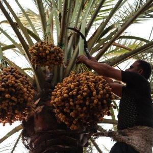 Kerman: Iran's Biggest Date Producing Province
