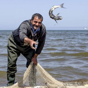 Bony Fish Output in Mazandaran Increases