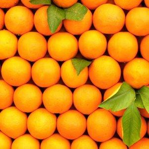 Orange Exports at 16,700 Tons
