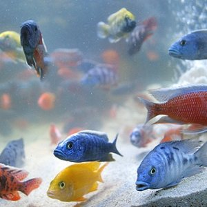 Ornamental Fish Imported From Four Countries