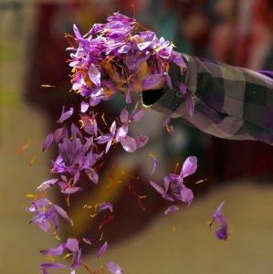 Iran produces more than 300 tons of saffron annually.