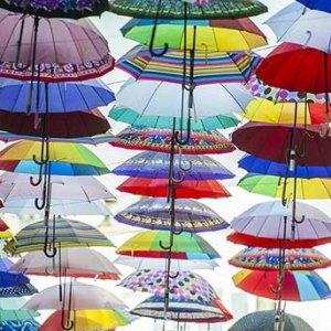 Umbrella Imports Top $1.5 Million