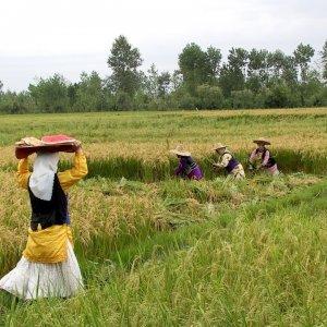 Farming PPI Rises 14%