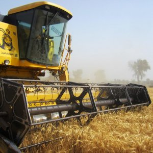 FAO: Iran 2nd Biggest Cereal Producer in Near East
