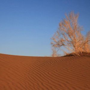 Varzaneh Desert in Photos