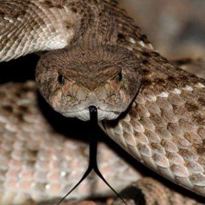 Initiative to Protect Venomous Snakes