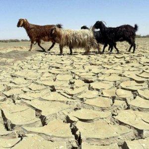 Dry Winter as Rains Stay Away, Again