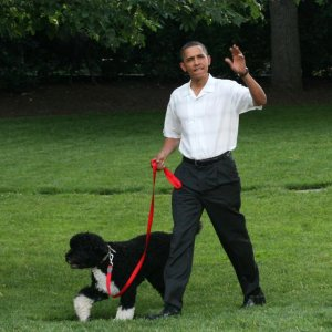 Plot to Steal Obama's Dog Foiled