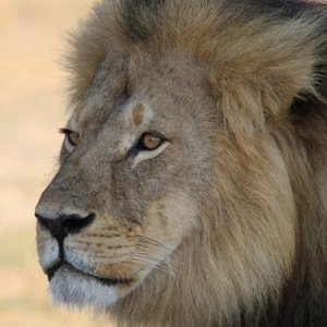 Major US Airlines Ban Hunting Trophies Shipment