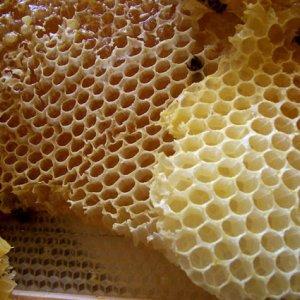 Tour of Honey Hub