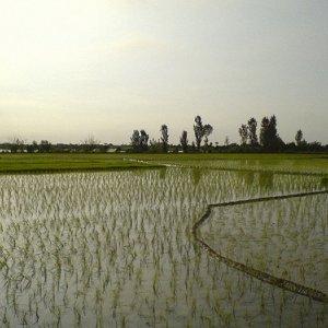 Agro Coop.  With Vietnam