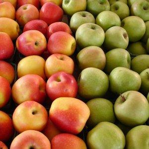 Bumper Apple Production