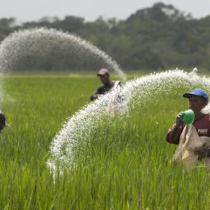 India's Urea Imports From Iran Rise Ninefold