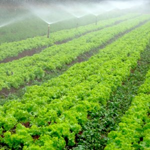 $360m for Agro Expansion