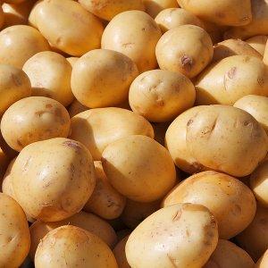Potato Exports Rise, Water Levels Fall