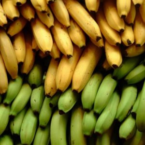 Banana Imports From Philippines