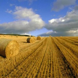 Agro Sector Share in Non-Oil Exports
