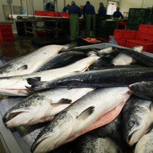Aquatic Exports to Russia