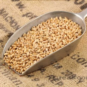 Guaranteed Purchase of Wheat