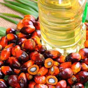 Palm Oil Imports