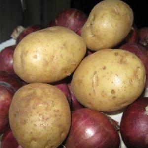 Potato, Onion Production