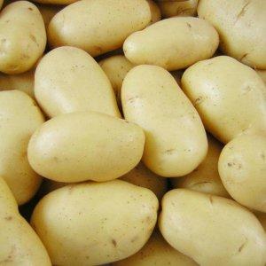 Ardabil Potato Exports