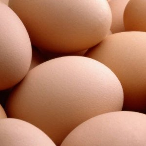 Egg Exports at Record High