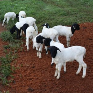Livestock Imports Banned