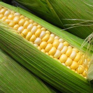Q1 Agro Imports