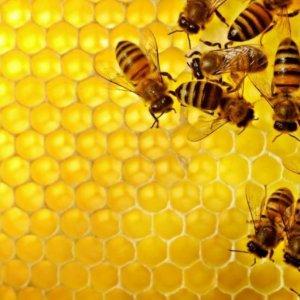 World's 7th Biggest Honey Producer