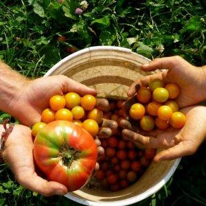 83,000 Hectares Under Organic Farming