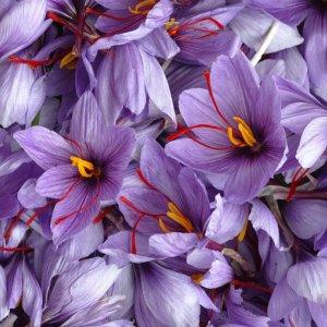 Saffron Exports Below Expectations