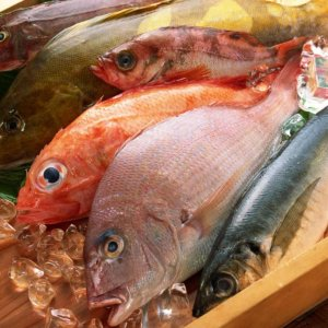 Seafood Export Target: $350m By Yearend