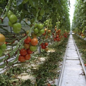 Horticultural Exports