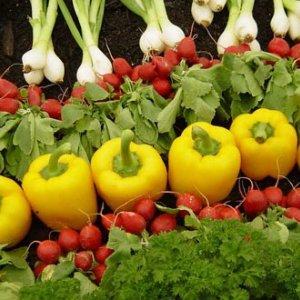 Lorestan Agro Exports