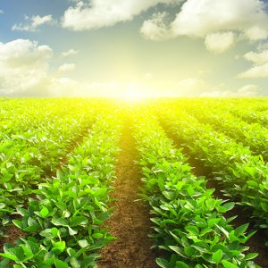 Expansion of Agro Ties With China