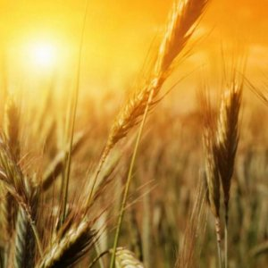 Report Predicts Agriculture Growth