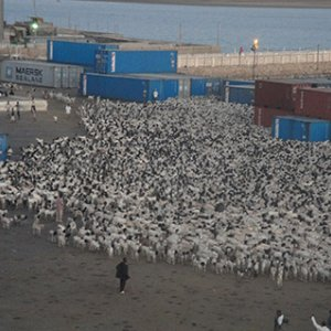 Livestock Export Tariff Eliminated