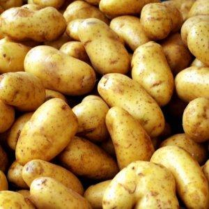 Potato Exports