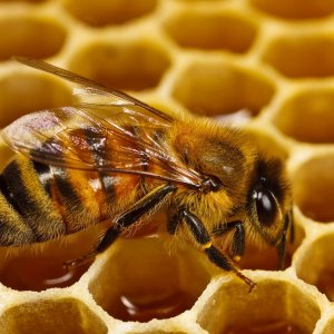 Honey Slump